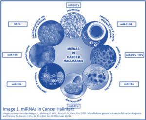 cancer hallmark